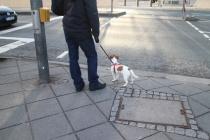 Hundetraining Bonn Dialog Hund