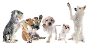 Hundeseminare Bonn Dialog Hund