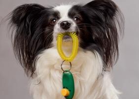 Gewaltfreies Hundetraining Bonn